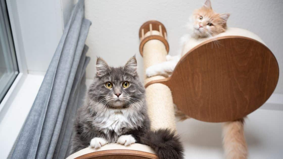 insegnare al gatto a non graffiare il divano con un tiragraffi