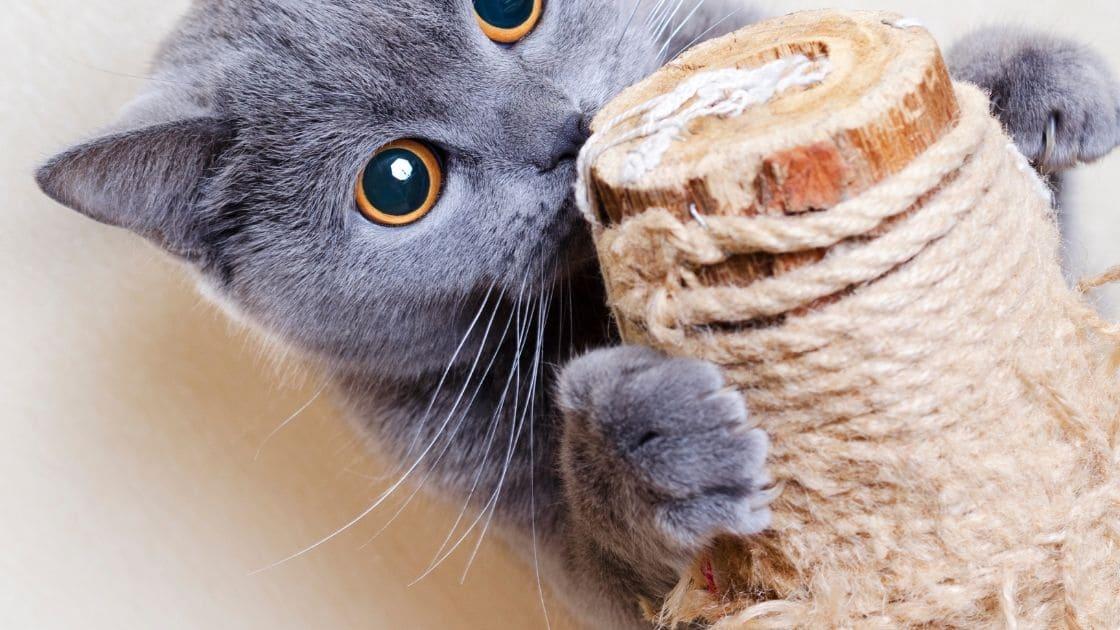 come pulire mobili gatto