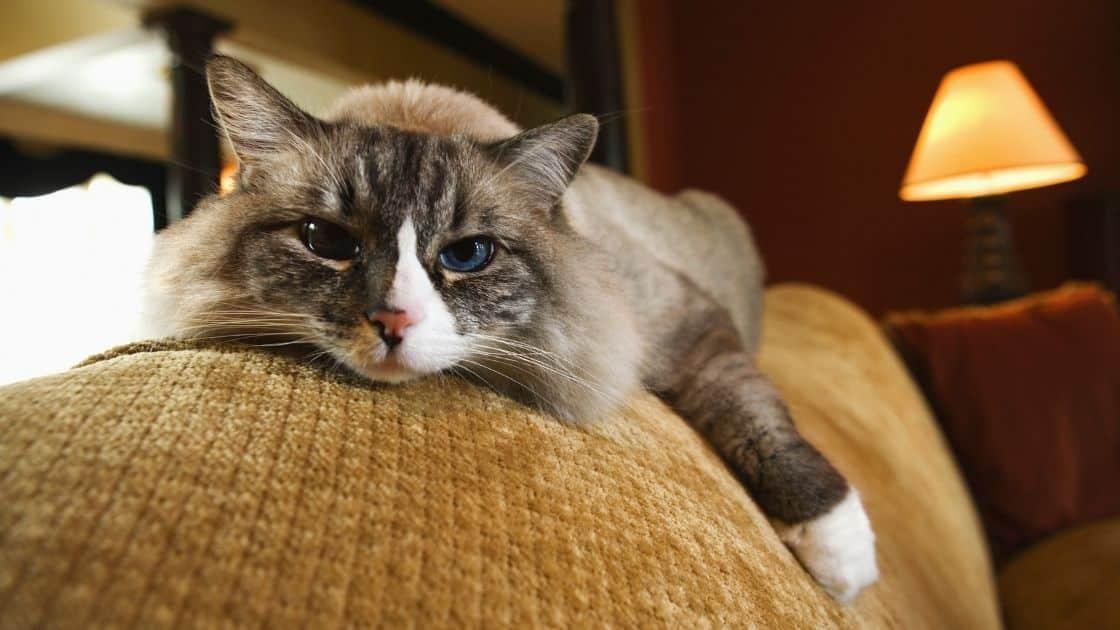 educare un gatto a non salire sui mobili